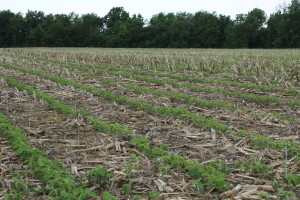Soybean Trial 1