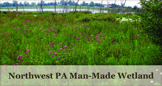 Northwest PA Man-Made Wetland