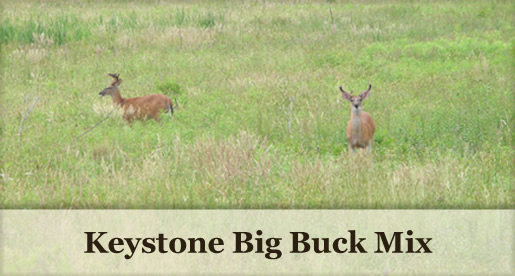 Keystone Big Buck Mix