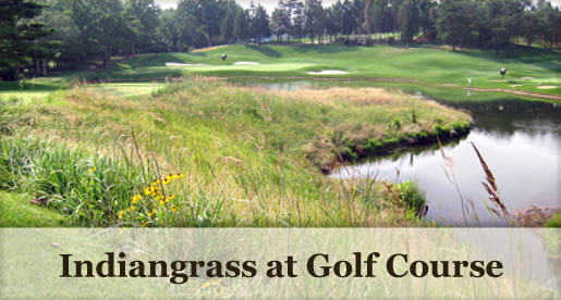Indiangrass at Golf Course
