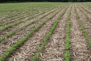 non-GMO vs RR 2Y